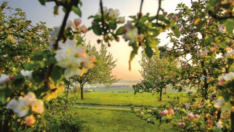 Foto Blüten Frühling